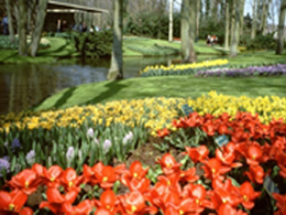Holland in bloom